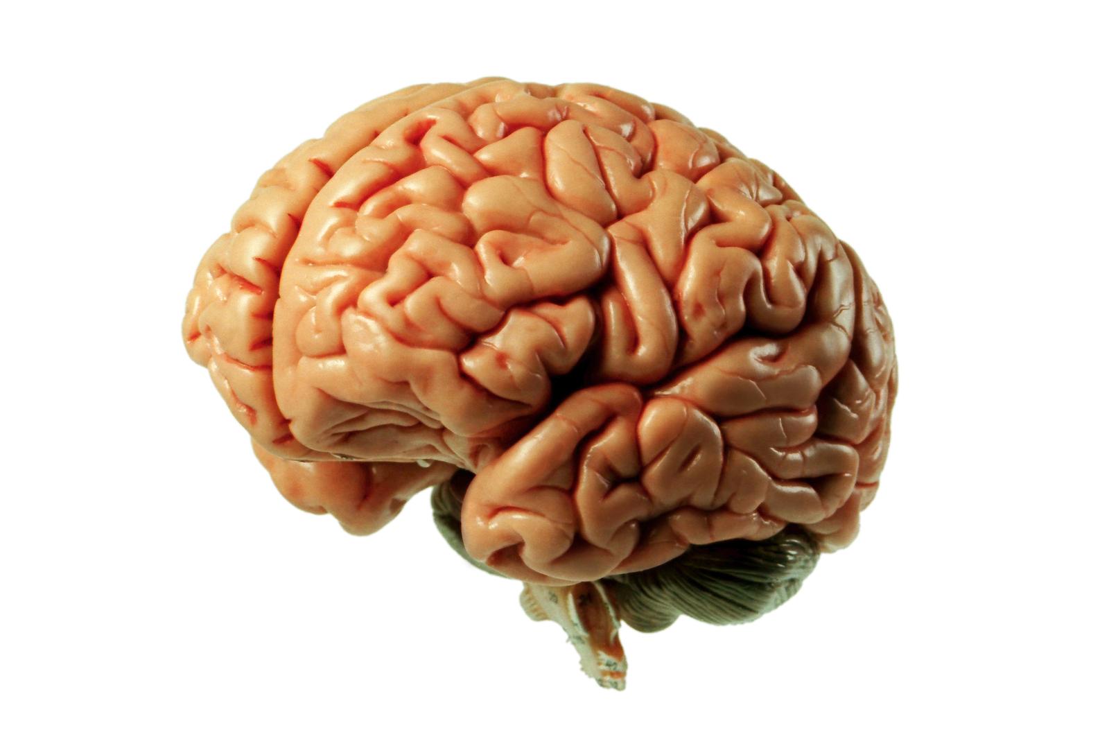 Gluten Brain